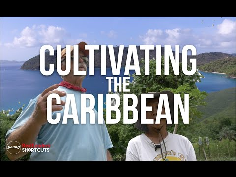 Organic Farm Provides For The Entire U.S Virgin Islands
