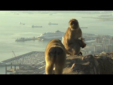 Zu wem gehört eigentlich Gibraltar nach dem Brexit?