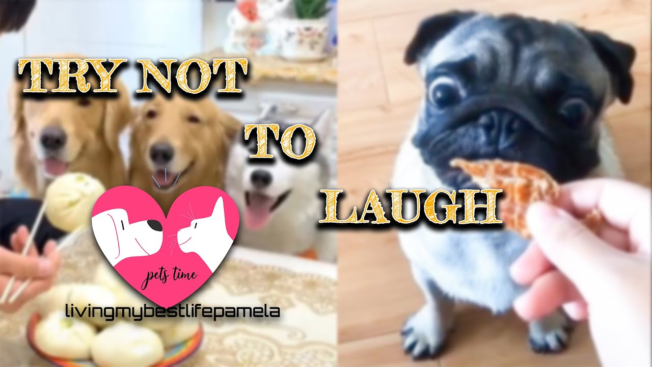 Download 🤣 Funniest 🐶 Dogs and 😻 Cats - Awesome Funny Pet Animals' Life Videos 😇