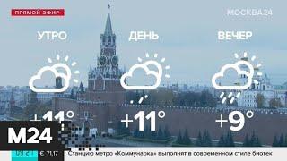 """Смотреть видео """"Утро"""": В Москве +8 градусов - Москва 24 онлайн"""