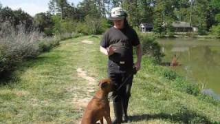 Dog Obedience 3: Seymour's Progress  Mississippi Dog Obedience