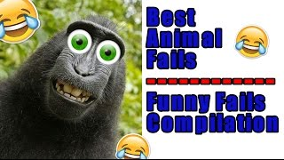 Best Animal Fails | Funny Fails Compilation