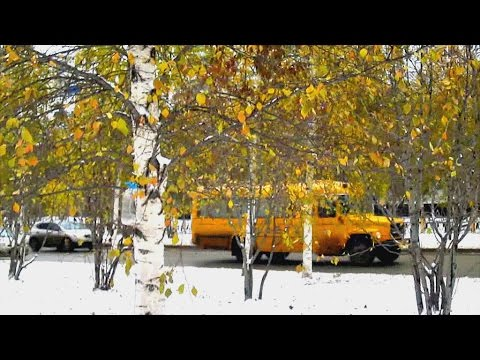 Октябрь в Нижневартовске. Встреча осени с зимою... Воробьи на снегу.