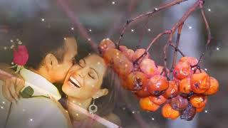 безумно трогательная песня о любви... Ион Суручану --- Куст рябины