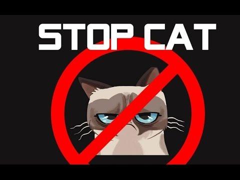 Ide Kreatif Cara Mengusir Kucing Liar Dengan Botol Youtube