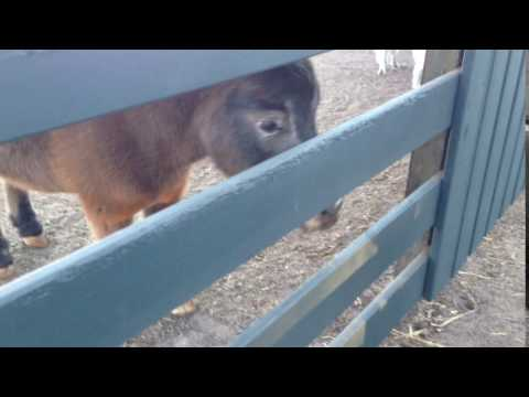 HHI - Horse hitting a fence