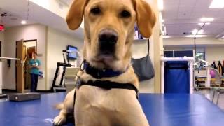 Galion Therapy Dog Shepherd Center
