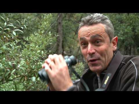 BIRDING ADVENTURES COCHISE COUNTY ARIZONA EPISODE 2 SANDHILL CRANES