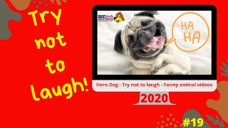 Hero Dog - Try not to laugh - Funny animal videos 2020 #19