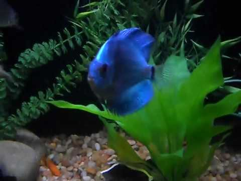 Steves Tropical Fish and Pond supply