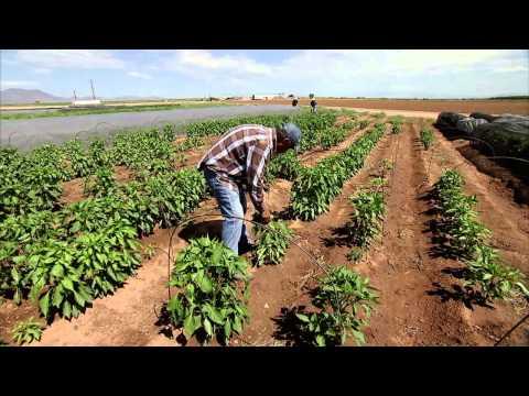 Chile Farming - America's Heartland