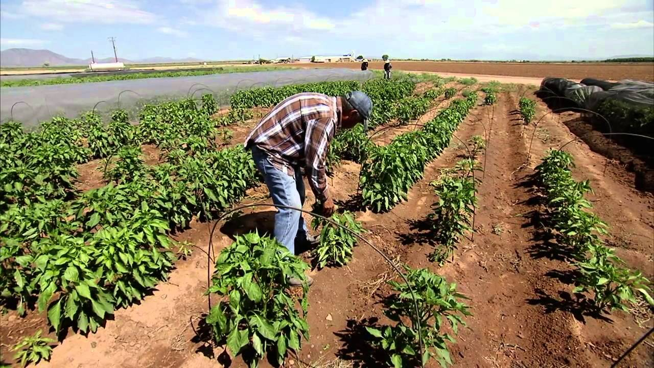 Chile Farming America S Heartland Youtube