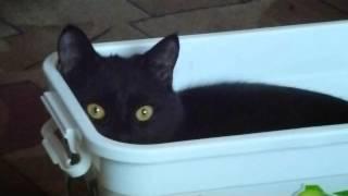 Вот что значит уют для кошки