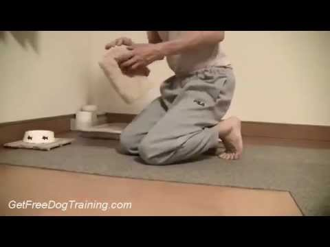 The Doggy Dans Online Dog Trainer Program - Toilet Training for Puppies or Dog