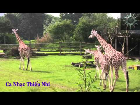 Ca Nhạc Thiếu Nhi HD4(Thăm vườn bách thú)