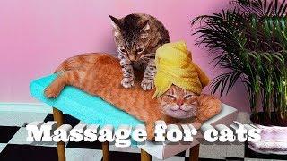 Массаж для кошек. Massage for cats.