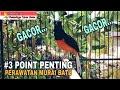 Tiga Point Penting Perawatan Murai Batu Gacor  Mp3 - Mp4 Download