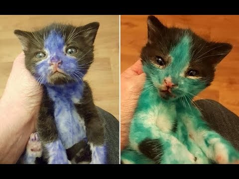 Abandoned Kittens Covered In Permanent Marker Get Their Very First Bath