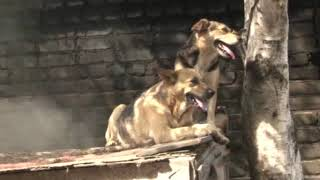 Телеканал Амурск - Финансирование на бездомных животных увеличено
