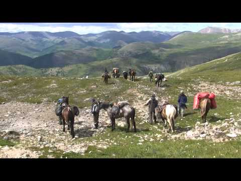 Птицы Сибири - travel-
