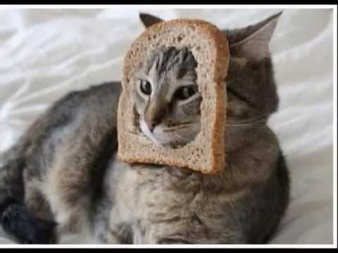 Cute Little Kid Wallpapers Cats With Bread In The Face Youtube