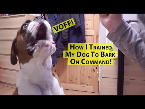 How I Trained My Dog To Bark On Command!