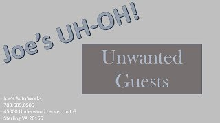 Joe's Uh-Oh! Unwanted guests