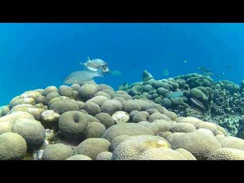 Snorkeling in Grenada Part 9 -- Extended Scene I