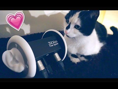ASMR Fail ! Cat Edition The Struggles of ASMR 😅
