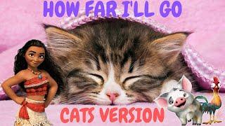 Cats Sing How Far I'll Go from Moana | Cats Singing Song Parody