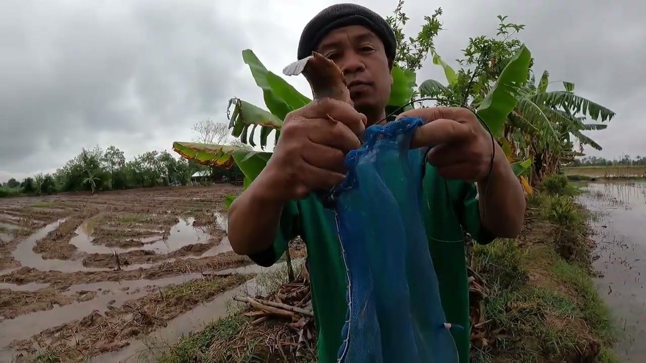 จอบปลาบืนปลาโดดช่วงฝนลง งานนี้มีเฮได้มากกว่าป่นแน่นอน
