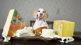 Dog Makes Cheese Platter: Funny Dog Maymo