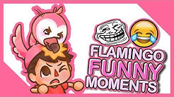 Flamingo Funny Moments