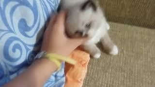 Мы продаем котят на Авито