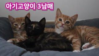 사이좋은 아기고양이3남매는 무엇을 하고 하루를 지낼까요?