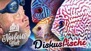 SO ein SENSIBELCHEN! | STORYTIME zum DISKUSFISCH Championat | NORBERTS WELT | Zoo Zajac