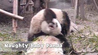 Funny! Naughty Boy Ride On The Back Of His Mother | iPanda