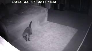 Чем занимаются кошки ночью? Часть4