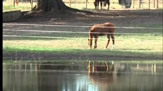 Installing your ElectroBraid Horse Fence
