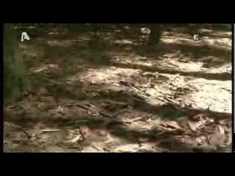 ΕΙΚΟΝΕΣ ALPHA ΒΙΕΤΝΑΜ ντοκουμέντα από τον πόλεμο οι παγίδες και τα τούνελ τον βιετκονκγ