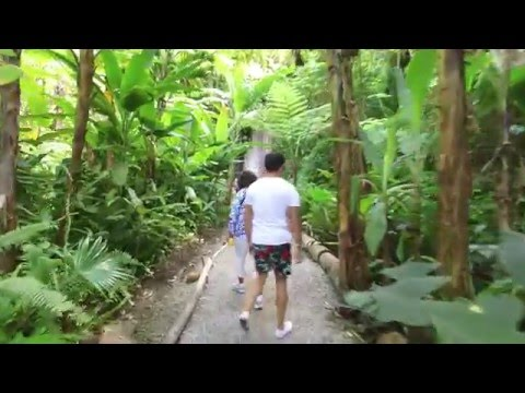St Lucia Caribbean Island, Diamond Waterfalls Botanical Garden - 4K Video