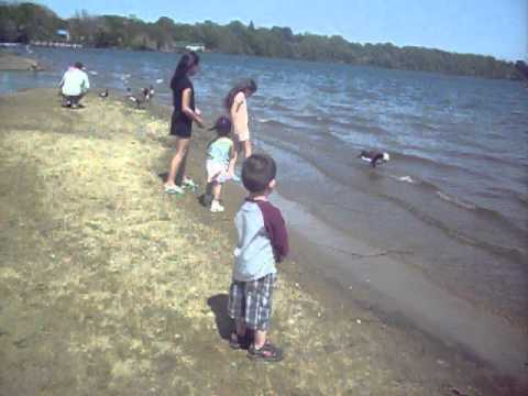 lago de ronkonkoma