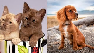 Cute Kittens and Puppies 1