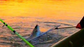 ЗОЛОТЫЕ ЯМЫ АСТРАХАНИ ВО ЭТО РЫБАЛКА рыбалка в Астрахани 2020