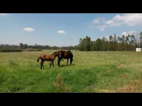 equestrian-centre/-stud-farm-for-sale