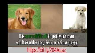 Potty Train Dog Or Puppy 2015, 2016, 2017, 2018, 2019, 2020