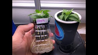 Indoor Mini Hydroponic For Peppers