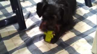 Cute Dog Chewing On Toy
