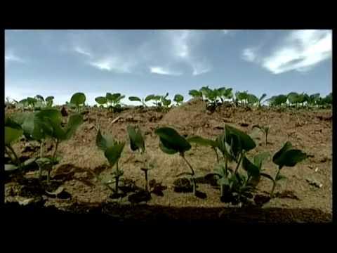 Meat Eating Drives Rainforest Destruction