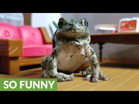 Frog's reaction to tasting bugs is simply hilarious